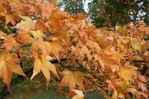 過ぎ行く秋の日に