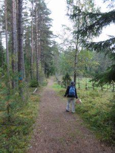 森のウォーキング