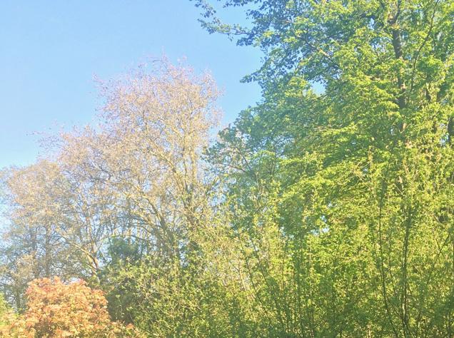 美しい木々